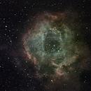 Rosette Nebula (NGC 2237),                                Miles Zhou