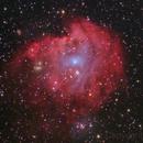 Monkey Head Nebula,                                Shannon Calvert