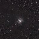 NGC7023  Iris Nebula,                                Jay P Swiglo