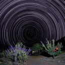 Star Trails around the North Pole Polaris,                                John Molders