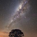 The Tree and the Galaxy,                                Rodrigo Andolfato