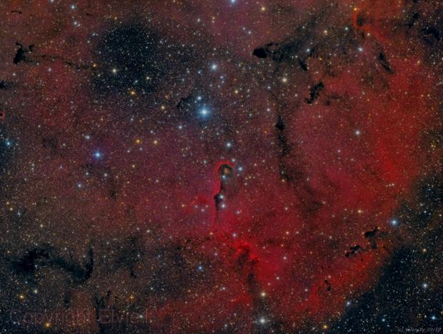 IC1396 - Elephant's Trunk Nebula,                                Elvie1