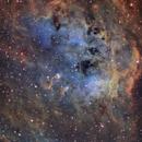 IC410 - The Tadpoles,                                Anna Morris