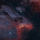 Pelican Nebula Bicolor with DSLR,                                Markus Bauer