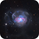 NGC 3310: Glittering Galaxy,                                Adam Block