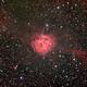 IC 5146 (Cocoon Nebula),                                Bogdan Jarzyna