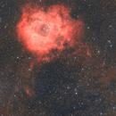 Rosette Nebula wide field,                                Ray's Astrophotog...