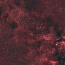 Cygnus Wide Field,                                Eric Cauble