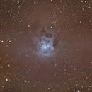 NGC 7023 - Nebulosa Iris,                                Luis Martinez
