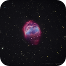 Abell 21 - The Medusa Nebula  (in hoo),                                Caroline Berger