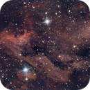 Pelican Nebula  IC5067,                                Ray Heinle