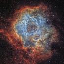 Rosette Nebula,                                Nik Szymanek