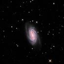 NGC 2903,                                Randy Roy