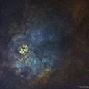 Sh2-124 in Northern Cygnus in SHO,                                Douglas J Struble