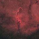 Elephant's Trunk Nebula, IC 1396,                                Ou Mingzhi
