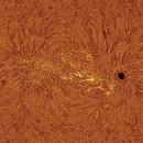 Sun H Alpha Active Reagion on 2021-06-03,                                Ruediger