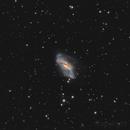 NGC2146 - A Twisted Mess,                                Jason Guenzel