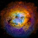 Elephant Trunk Nebula Wide Field,                                Glenn C Newell