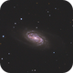 NGC2903 and Evelyn,                                Joostie