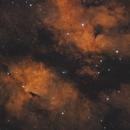 Butterfly Nebula/Sadr Region,                                Tim Richter