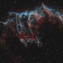 Bat Nebula in the Eastern Veil - Bicolour,                                Steve Milne