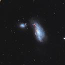 Arp 269 - NGC4490 - Cocoon Galaxy,                                  Algorab