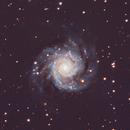 M74 The Phantom Galaxy,                                Michael Broyles