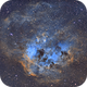 IC410 : Tadpoles swimming in an ocean of hydrogen and oxygen,                                The Disastronomers