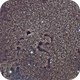 Snake Nebula = Barnard 72,  wide field version,                                Julian Shaw