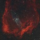 SH2-129 & OU4 – Flying Bat & Squid Nebulae,                                Dominik W