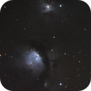Young stars in M78, NGC 2071, 2067, 2064 and LDN 1627,                                apricot
