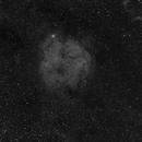 IC 1396 wide field,                                Alan Hancox