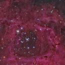 The Rosette Nebula,                                  Eric Coles (coles44)