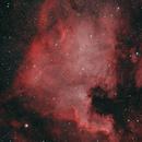 NGC7000/C20 - The North American Nebula,                                bill_w