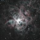 NGC2070 Tarantula at f7 HaRGB,                                turbo_pascale