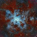 Tarantula  NGC2070,                                Westcoastnz