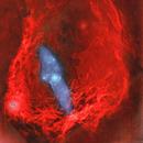 Flying Bat and Squid nebulae Sh2-129/Ou4 widefield (c-shorgb),                                Ram Samudrala