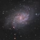 LaGalassia del Triangolo M33,                                Andrea Losi