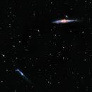 Whale & co NGC 4631on Lacerta 250,                                Piet Vanneste