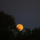 Full Moon Rising - 4/29/18,                                Donnie B.