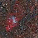NGC 2264 in Monoceros,                                Roberto Coleschi