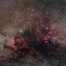 Cygnus - Widefield 50mm,                                Norbert Reuschl