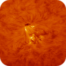 Sunspot Region 2806 Animation,                                Eric Coles (coles44)