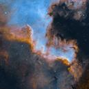 Cygnus Wall,                                Spencer Collins