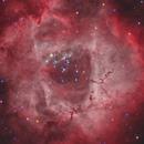 Rosette nebula (NGC 2237) in HOO-RGB,                                Trần Hạ