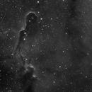 The Elephant Trunk Nebula, Part of IC 1396,                                Madratter
