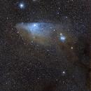 Blue Horse head nebula,                                Jocelyn Podmilsak