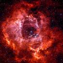 Rosette Nebula,                                Phillip Esce