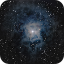 NGC 7023 - Iris Nebula,                                David N Kidd
