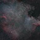 NGC 7000,                                Adhosler